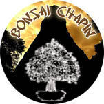 Bonsai Chapin